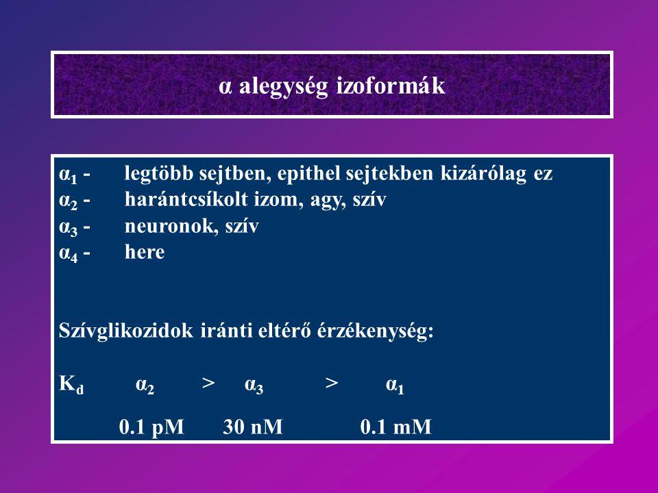 α alegység izoformák α 1 -legtöbb sejtben, epithel sejtekben kizárólag ez α 2 -harántcsíkolt izom, agy, szív α 3 -neuronok, szív α 4 - here Szívglikoz