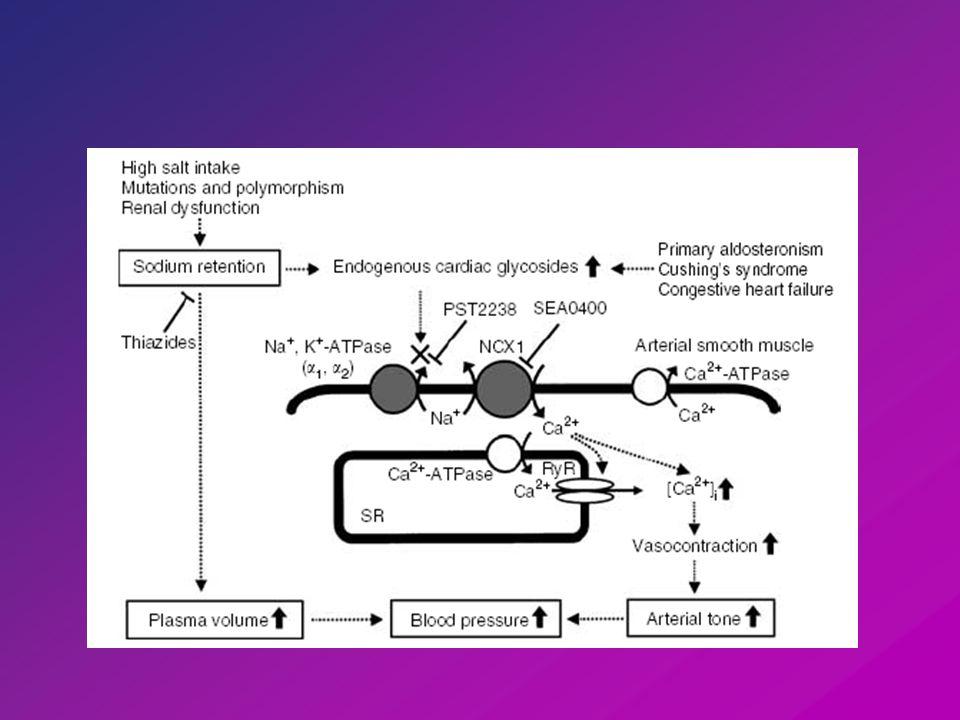 HORMONOK KORTIKOSZTEROIDOK (aldoszteron, dexamethazon) aldoszteron: csökent Na + bevitelhez való long-term adaptáció vese long term hatás - fokozott Na,K-ATPáz mRNS expresszió short term hatás - enzim aktivitás fokozás (Na + iránti K M csökkentés?) long term upreguláció - α 1, α 2, α 3 izoformákra leírták (simaizom, agy, szív) ENDOGEN STROFANTIN Reguláció
