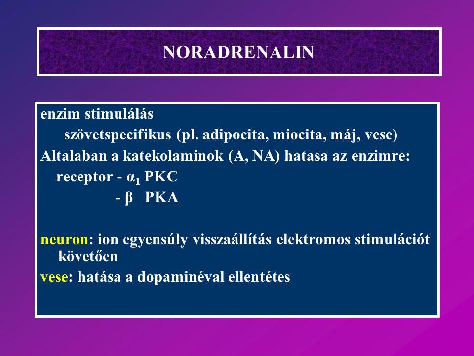 NORADRENALIN enzim stimulálás szövetspecifikus (pl. adipocita, miocita, máj, vese) Altalaban a katekolaminok (A, NA) hatasa az enzimre: receptor - α 1