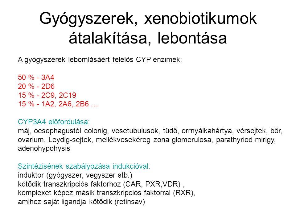 Gyógyszerek, xenobiotikumok átalakítása, lebontása A gyógyszerek lebomlásáért felelős CYP enzimek: 50 % - 3A4 20 % - 2D6 15 % - 2C9, 2C19 15 % - 1A2, 2A6, 2B6 … CYP3A4 előfordulása: máj, oesophagustól colonig, vesetubulusok, tüdő, orrnyálkahártya, vérsejtek, bőr, ovarium, Leydig-sejtek, mellékvesekéreg zona glomerulosa, parathyriod mirigy, adenohypohysis Szintézisének szabályozása indukcióval: induktor (gyógyszer, vegyszer stb.) kötődik transzkripciós faktorhoz (CAR, PXR,VDR), komplexet képez másik transzkripciós faktorral (RXR), amihez saját ligandja kötődik (retinsav)