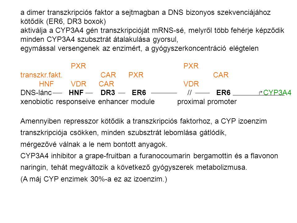 a dimer transzkripciós faktor a sejtmagban a DNS bizonyos szekvenciájához kötődik (ER6, DR3 boxok) aktiválja a CYP3A4 gén transzkripcióját mRNS-sé, melyről több fehérje képződik minden CYP3A4 szubsztrát átalakulása gyorsul, egymással versengenek az enzimért, a gyógyszerkoncentráció elégtelen PXR PXR transzkr.fakt.