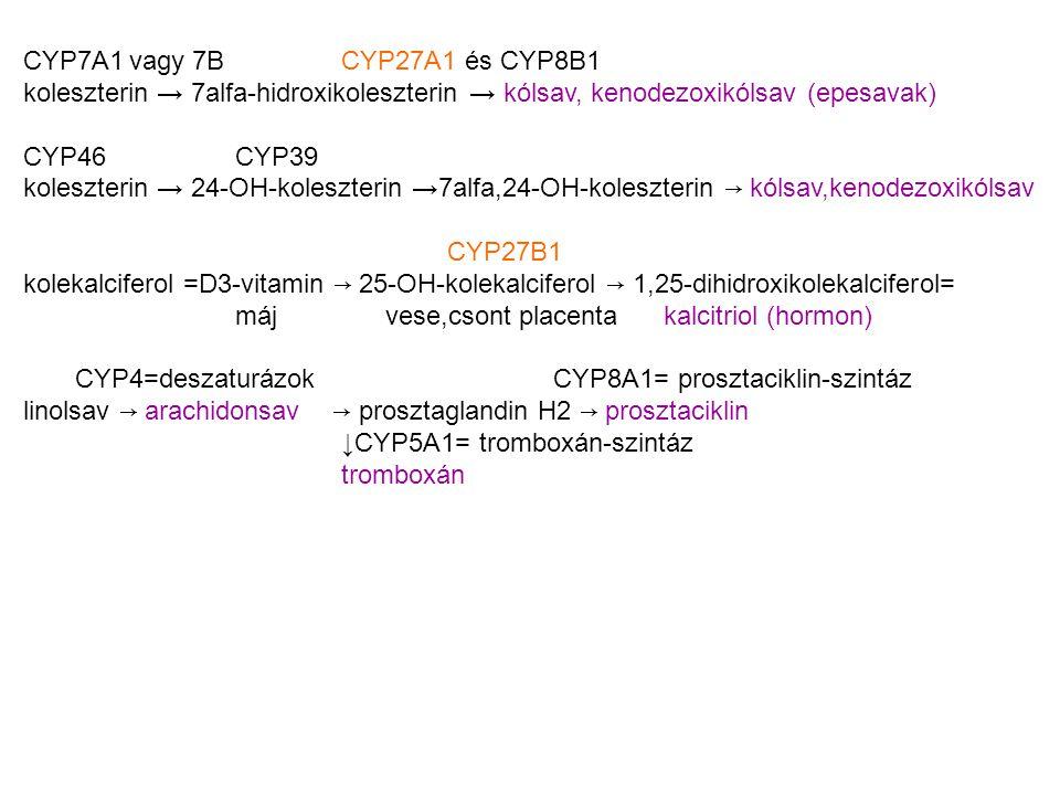 CYP7A1vagy 7BCYP27A1 és CYP8B1 koleszterin → 7alfa-hidroxikoleszterin → kólsav, kenodezoxikólsav (epesavak) CYP46CYP39 koleszterin → 24-OH-koleszteri