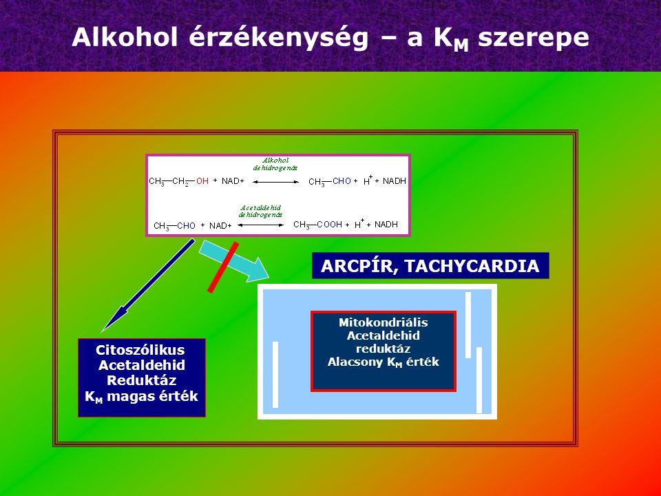 Alkohol érzékenység – a K M szerepe Citoszólikus Acetaldehid Reduktáz K M magas érték Mitokondriális Acetaldehid reduktáz Alacsony K M érték ARCPÍR, TACHYCARDIA