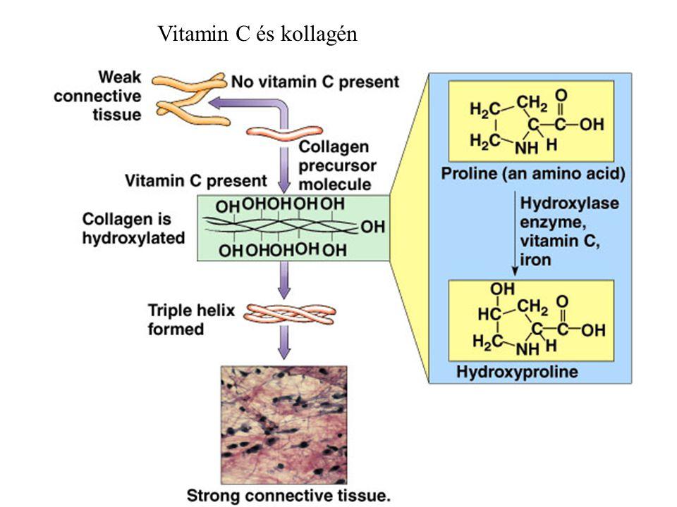 26 Vitamin C és kollagén