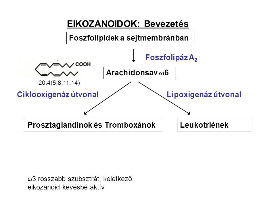 EIKOZANOIDOK: Bevezetés Foszfolipidek a sejtmembránban Arachidonsav  6 LeukotriénekProsztaglandinok és Tromboxánok Foszfolipáz A 2 Ciklooxigenáz útvonalLipoxigenáz útvonal 20:4(5,8,11,14)  3 rosszabb szubsztrát, keletkező eikozanoid kevésbé aktív