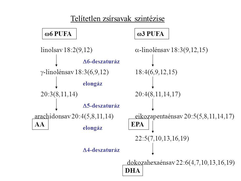 Telítetlen zsírsavak szintézise  6 PUFA  3 PUFA linolsav 18:2(9,12)  -linolénsav 18:3(9,12,15)  6-deszaturáz  -linolénsav 18:3(6,9,12) 18:4(6,9,12,15) elongáz 20:3(8,11,14)20:4(8,11,14,17)  5-deszaturáz arachidonsav 20:4(5,8,11,14)eikozapentaénsav 20:5(5,8,11,14,17) elongáz 22:5(7,10,13,16,19)  4-deszaturáz dokozahexaénsav 22:6(4,7,10,13,16,19) DHA EPAAA