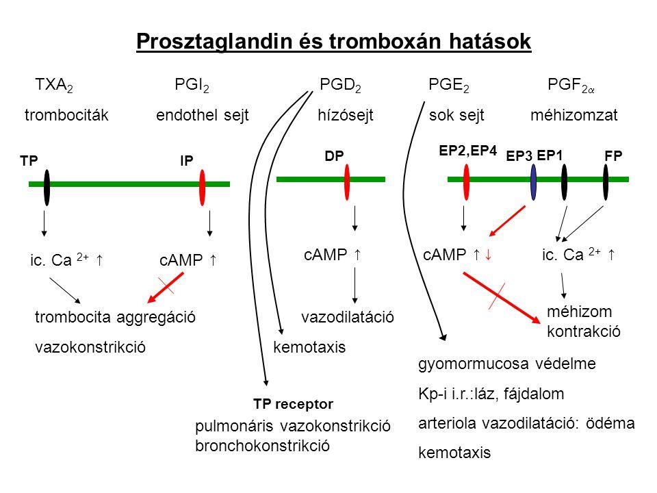 TXA 2 Prosztaglandin és tromboxán hatások PGE 2 PGD 2 PGI 2 PGF 2  trombocitákendothel sejt hízósejt sok sejt méhizomzat trombocita aggregáció vazokonstrikció TPIP ic.