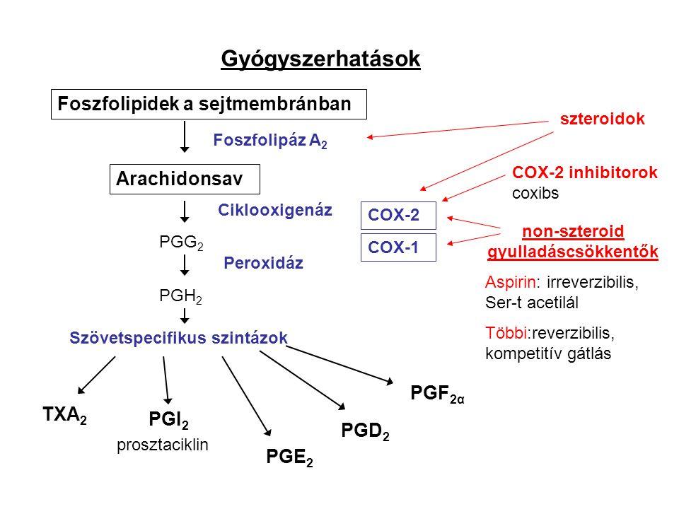 Gyógyszerhatások Foszfolipidek a sejtmembránban Arachidonsav Foszfolipáz A 2 Szövetspecifikus szintázok PGG 2 PGH 2 Peroxidáz Ciklooxigenáz PGE 2 PGI 2 PGF 2α TXA 2 PGD 2 prosztaciklin szteroidok COX-2 COX-1 non-szteroid gyulladáscsökkentők Aspirin: irreverzibilis, Ser-t acetilál Többi:reverzibilis, kompetitív gátlás COX-2 inhibitorok coxibs