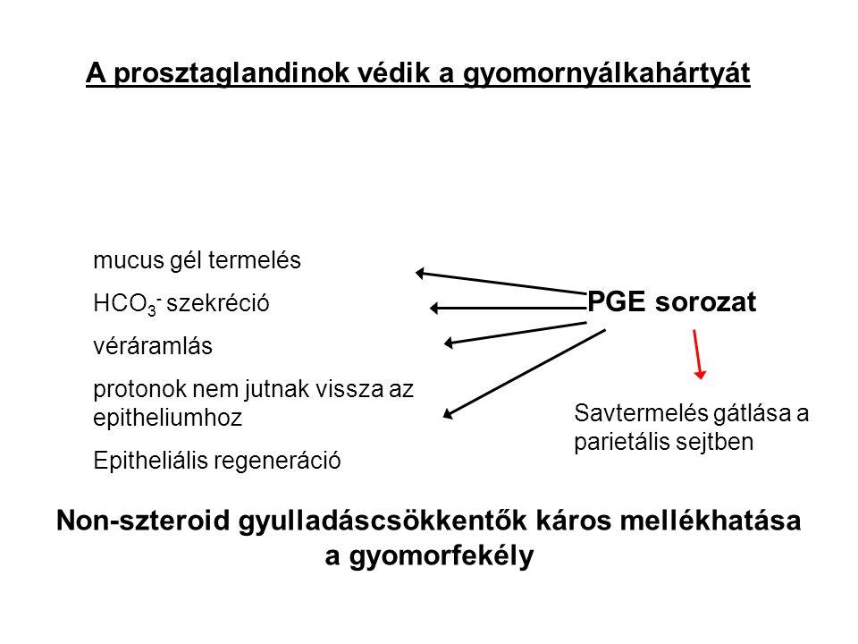 A prosztaglandinok védik a gyomornyálkahártyát mucus gél termelés HCO 3 - szekréció véráramlás protonok nem jutnak vissza az epitheliumhoz Epitheliális regeneráció PGE sorozat Savtermelés gátlása a parietális sejtben Non-szteroid gyulladáscsökkentők káros mellékhatása a gyomorfekély