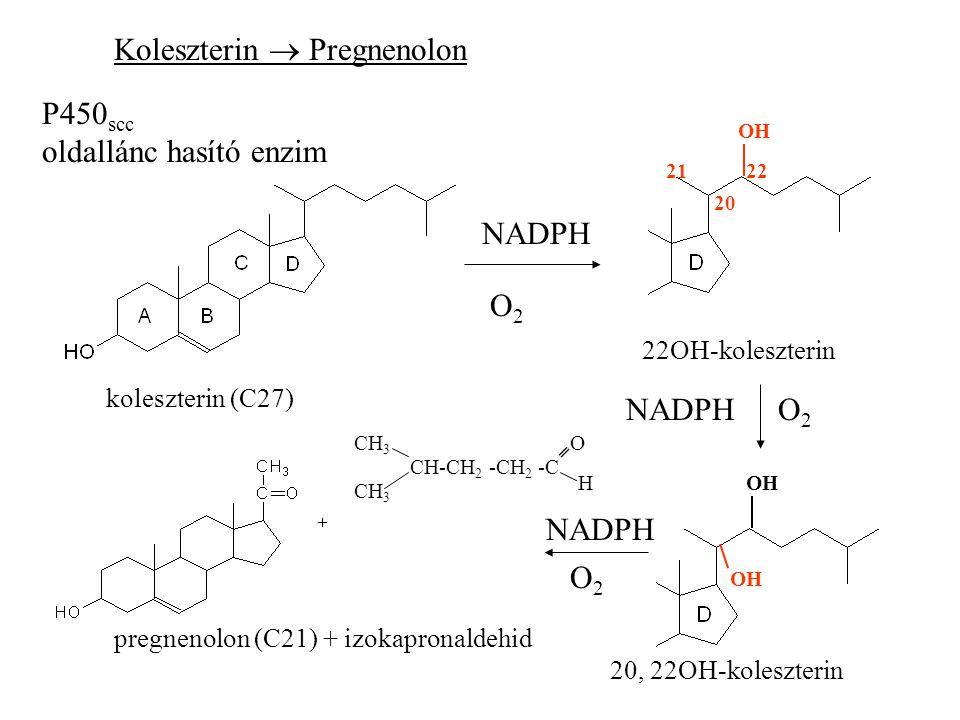 Koleszterin  Pregnenolon P450 scc oldallánc hasító enzim koleszterin (C27) pregnenolon (C21) + izokapronaldehid NADPH O2O2 20 2122 OH 22OH-koleszterin NADPHO2O2 OH 20, 22OH-koleszterin O2O2 NADPH CH 3 CH-CH 2 -CH 2 -C O H