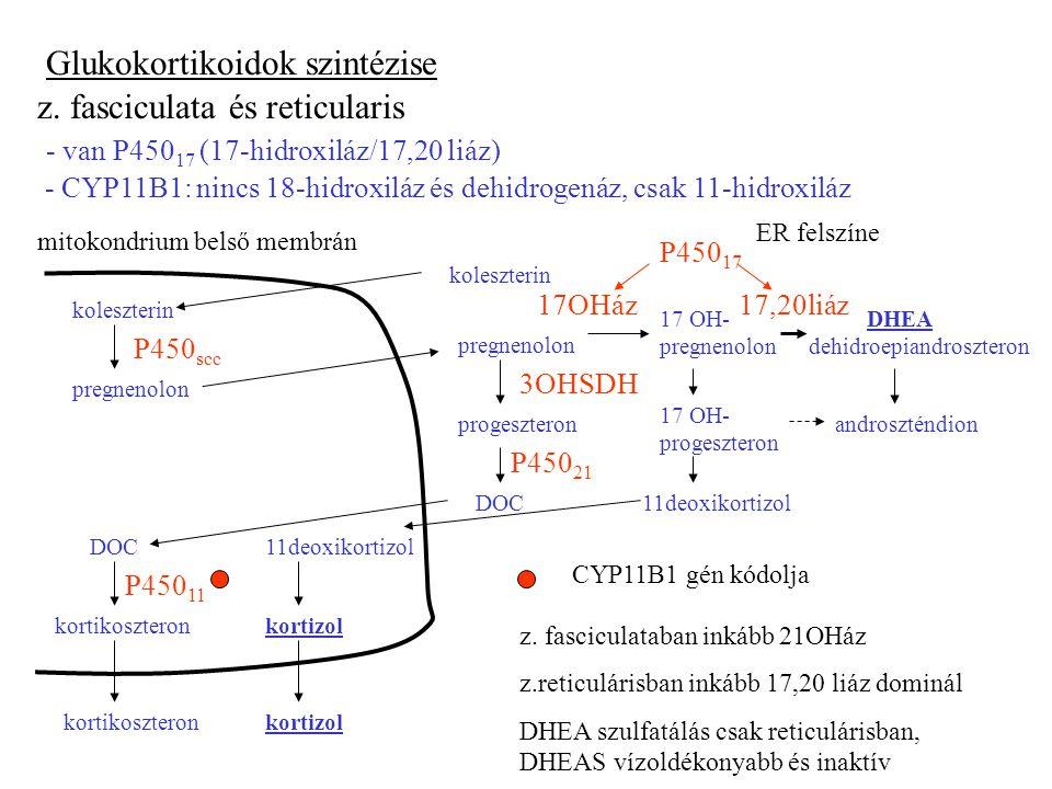 Glukokortikoidok szintézise z.