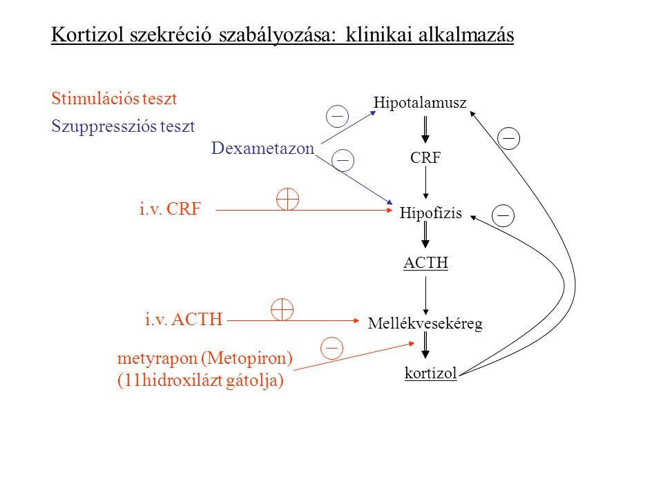 Kortizol szekréció szabályozása: klinikai alkalmazás Hipotalamusz Stimulációs teszt Szuppressziós teszt Hipofízis Mellékvesekéreg kortizol ACTH CRF i.v.
