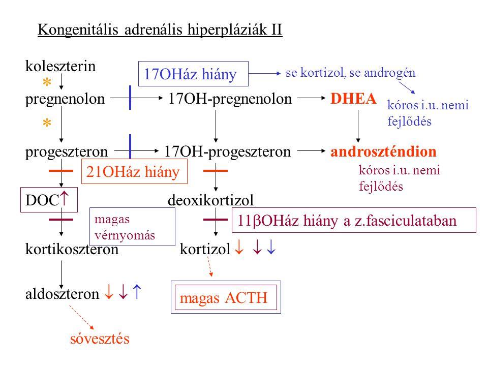 Kongenitális adrenális hiperpláziák II koleszterin pregnenolon progeszteron17OH-progeszteron 17OH-pregnenolonDHEA androszténdion DOC  kortikoszteron deoxikortizol kortizol    21OHáz hiány sóvesztés magas ACTH 11  OHáz hiány a z.fasciculataban magas vérnyomás kóros i.u.