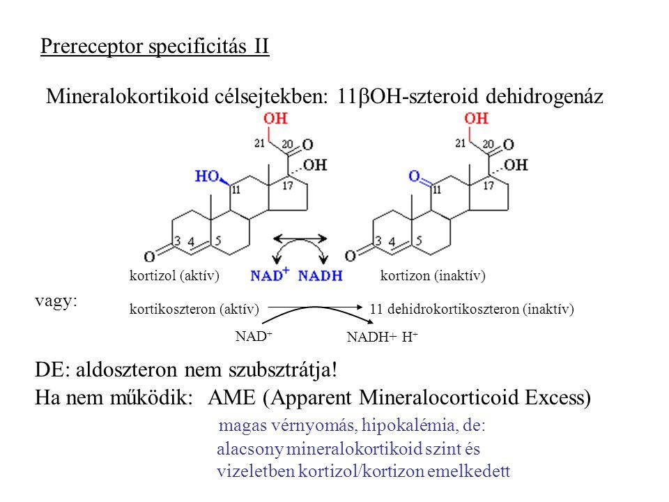 Prereceptor specificitás II Mineralokortikoid célsejtekben: 11  OH-szteroid dehidrogenáz kortizol (aktív)kortizon (inaktív) kortikoszteron (aktív)11 dehidrokortikoszteron (inaktív) NAD + NADH+ H + vagy: DE: aldoszteron nem szubsztrátja.