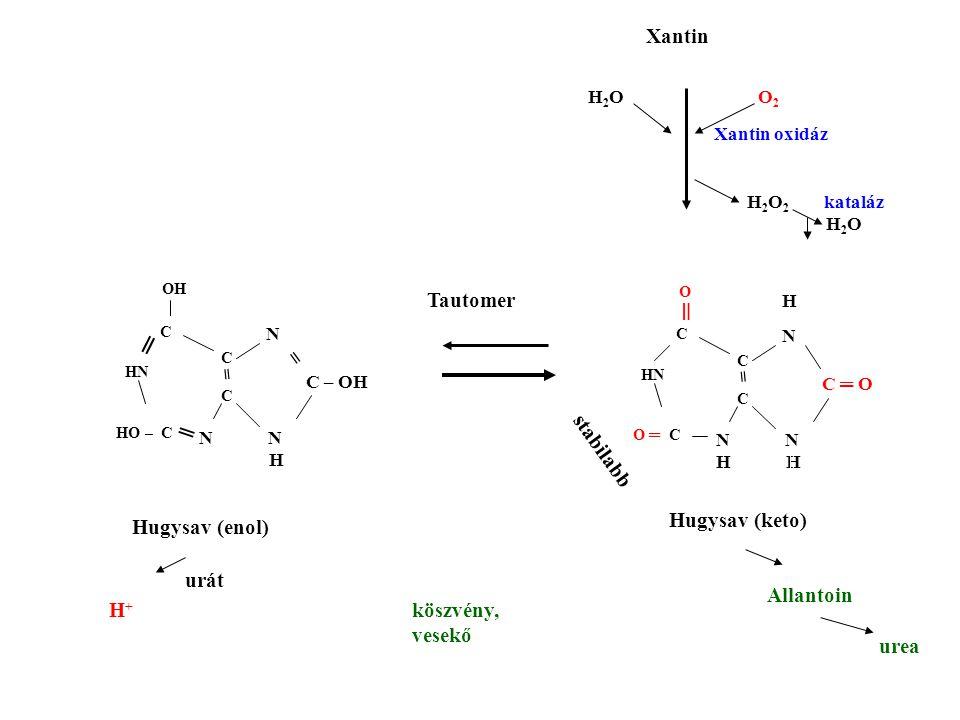 N N H N C – OH = = C HN OH C C HO – C ═ N N H H N C ═ O = C HN O C C O ═ C ═ stabilabb H 2 O O 2 Xantin oxidáz H 2 O 2 kataláz H 2 O Tautomer Hugysav