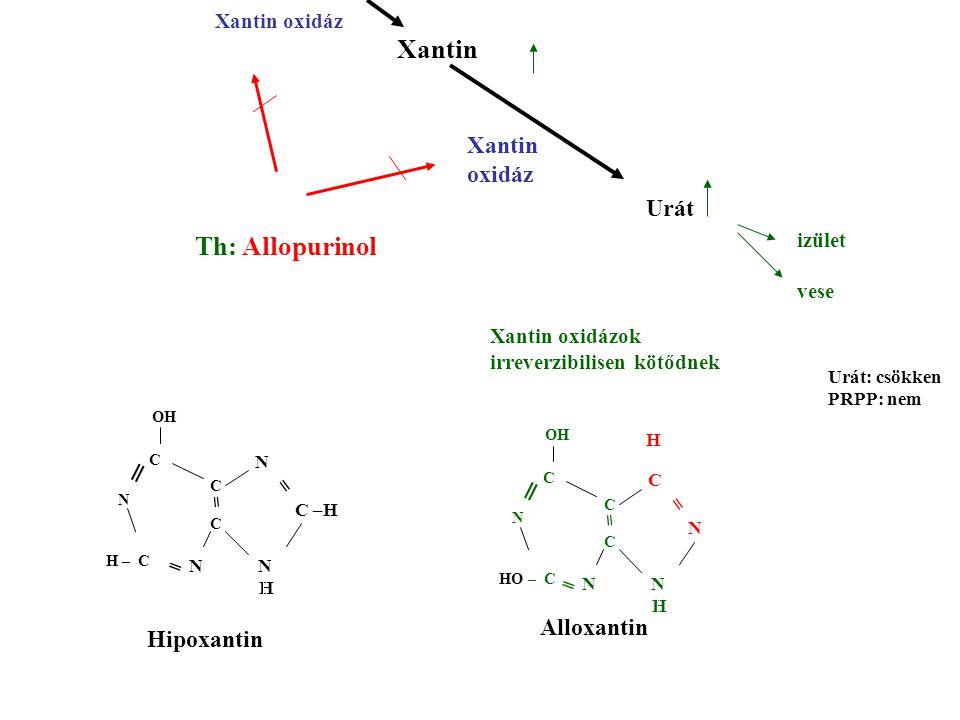Xantin Th: Allopurinol Xantin oxidáz Urát izület vese Xantin oxidáz N N H C N = = C N OH C C HO – C ═ ═ N N H N C –H = = C N OH C C H – C ═ ═ H Xantin