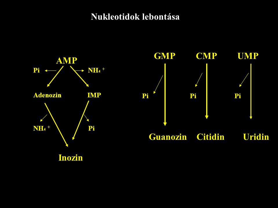 """Adenozin-dezamináz dezoxi-adenozin, adenozin Örökletes hiánya SCID-szindroma (sever combined immunodeficiency) """"Non HIV AIDS -nek is nevezik a hasonló tünetek miatt"""