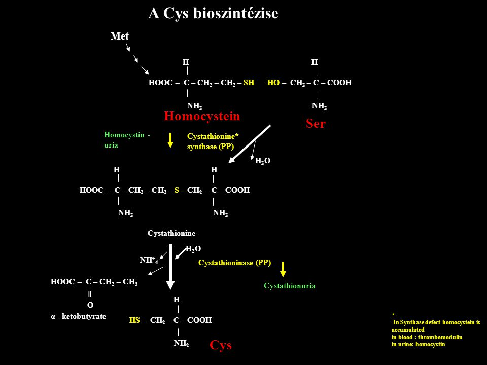 A Cys bioszintézise Met HOOC – C – CH 2 – CH 2 – SH H NH 2 Homocystein Homocystin - uria Cystathionine* synthase (PP) H2OH2O HOOC – C – CH 2 – CH 2 – S – CH 2 – C – COOH H H NH 2 Cystathionine H2OH2O Cystathioninase (PP) Cystathionuria NH + 4 HOOC – C – CH 2 – CH 3 O α - ketobutyrate ═ HS – CH 2 – C – COOH H NH 2 Cys * In Synthase defect homocystein is accumulated in blood : thrombomodulin in urine: homocystin HO – CH 2 – C – COOH H NH 2 Ser
