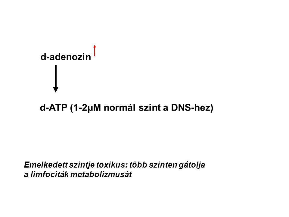 Hipoxantin + PRPP Hipoxantin-guanin- foszforibozil transzferáz PPi Guanin + PRPP PPi HN C HC C C O N N CH = = = R - P IMP = HN C C C N N CH = = = R - P = O GMP PMN Immun Agy H2NH2N Ø – Felhasználja (elfogyasztja) a PRPP-t – AMP, GMP, IMP gátolja saját szintézisét