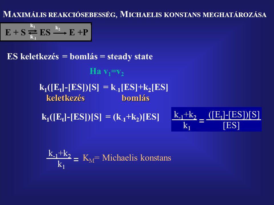 M AXIMÁLIS REAKCIÓSEBESSÉG, M ICHAELIS KONSTANS MEGHATÁROZÁSA E + S  ES E +P k1k1 k2k2 k -1 ES keletkezés = bomlás = steady state k 1 ([E t ]-[ES])[S] keletkezés keletkezés = k -1 [ES]+k 2 [ES] bomlás bomlás Ha v 1 =v 2 k 1 ([E t ]-[ES])[S]= (k -1 +k 2 )[ES] k -1 +k 2 ([E t ]-[ES])[S] k 1 [ES] k -1 +k 2 k 1 K M = Michaelis konstans