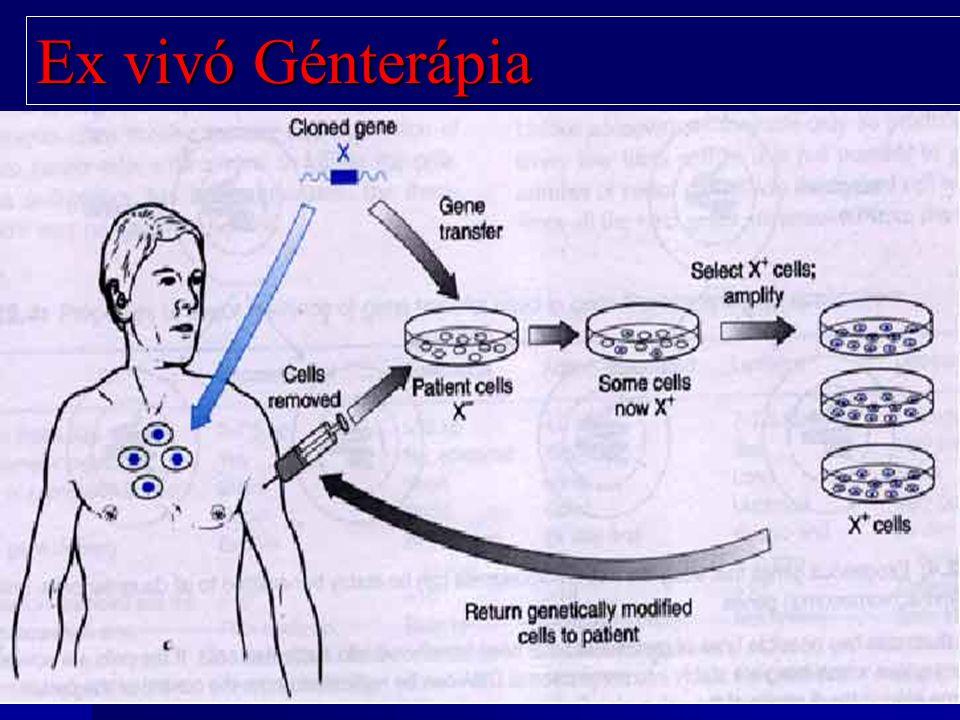 Ex vivó Génterápia