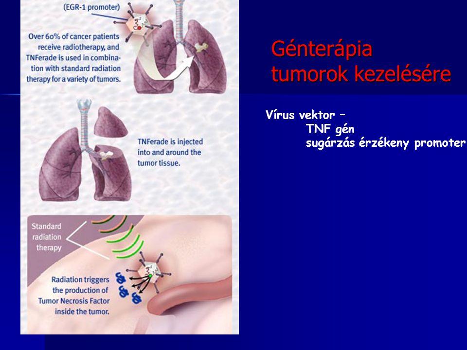 Génterápia tumorok kezelésére Vírus vektor – TNF gén sugárzás érzékeny promoter