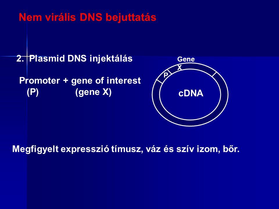 Nem virális DNS bejuttatás 2.