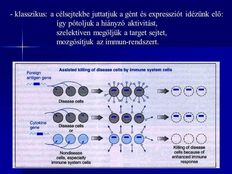 - klasszikus: a célsejtekbe juttatjuk a gént és expressziót idézünk elô: így pótoljuk a hiányzó aktivitást, szelektíven megöljük a target sejtet, mozgósítjuk az immun-rendszert.