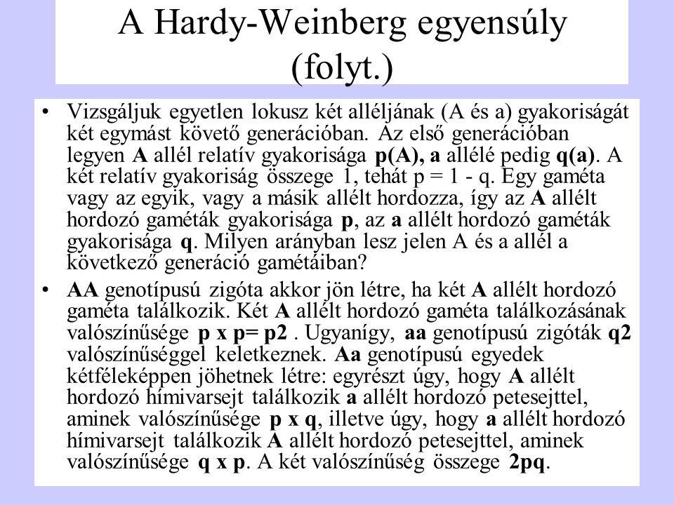 A Hardy-Weinberg egyensúly (folyt.) Vizsgáljuk egyetlen lokusz két alléljának (A és a) gyakoriságát két egymást követő generációban. Az első generáció