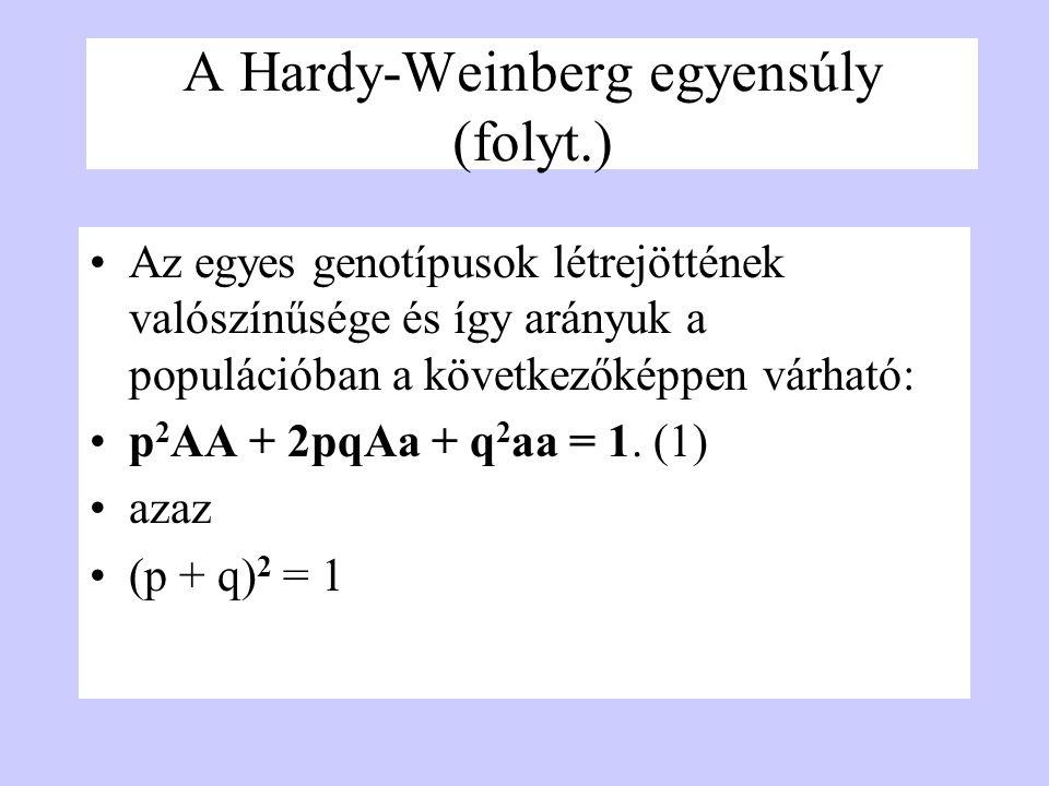 A Hardy-Weinberg egyensúly (folyt.) Az egyes genotípusok létrejöttének valószínűsége és így arányuk a populációban a következőképpen várható: p 2 AA +