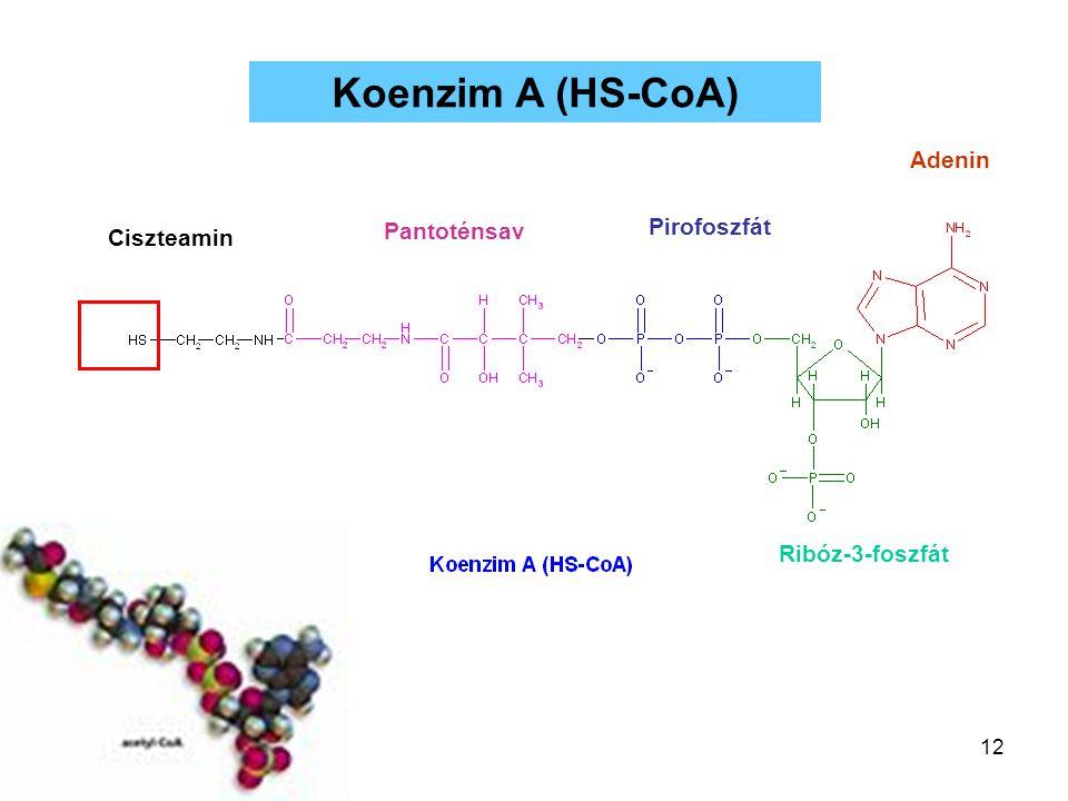 12 Koenzim A (HS-CoA) Adenin Ribóz-3-foszfát Pirofoszfát Pantoténsav Ciszteamin