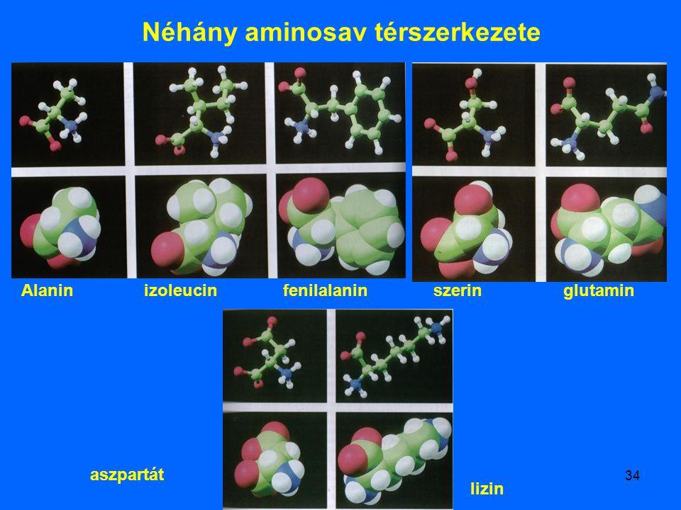 34 Néhány aminosav térszerkezete Alanin izoleucin fenilalanin szerin glutamin aszpartát lizin