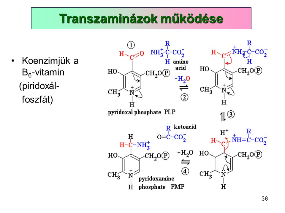 36 Koenzimjük a B 6 -vitamin (piridoxál- foszfát) Transzaminázok működése