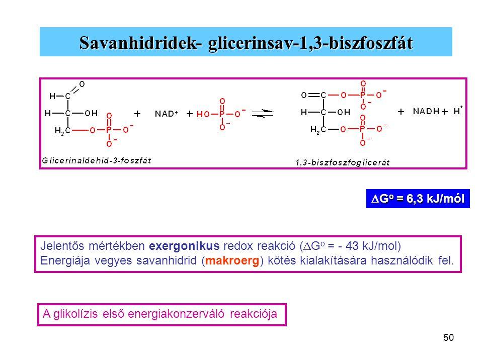 50 Savanhidridek- glicerinsav-1,3-biszfoszfát Jelentős mértékben exergonikus redox reakció (  G o = - 43 kJ/mol) Energiája vegyes savanhidrid (makroe