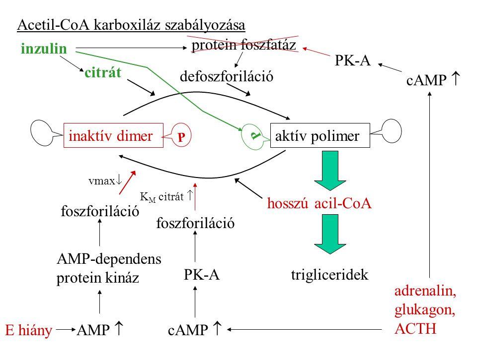 Acetil-CoA karboxiláz szabályozása aktív polimerinaktív dimer citrát hosszú acil-CoA trigliceridek protein foszfatáz foszforiláció AMP-dependens protein kináz AMP  E hiány cAMP  PK-A defoszforiláció adrenalin, glukagon, ACTH inzulin PK-A foszforiláció cAMP  vmax  K M citrát  P P