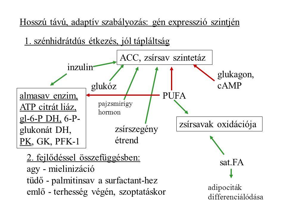 Hosszú távú, adaptív szabályozás: gén expresszió szintjén 1.