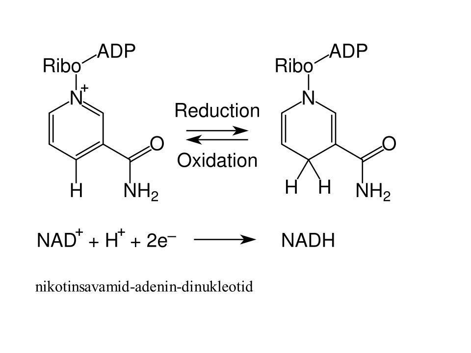 nikotinsavamid-adenin-dinukleotid