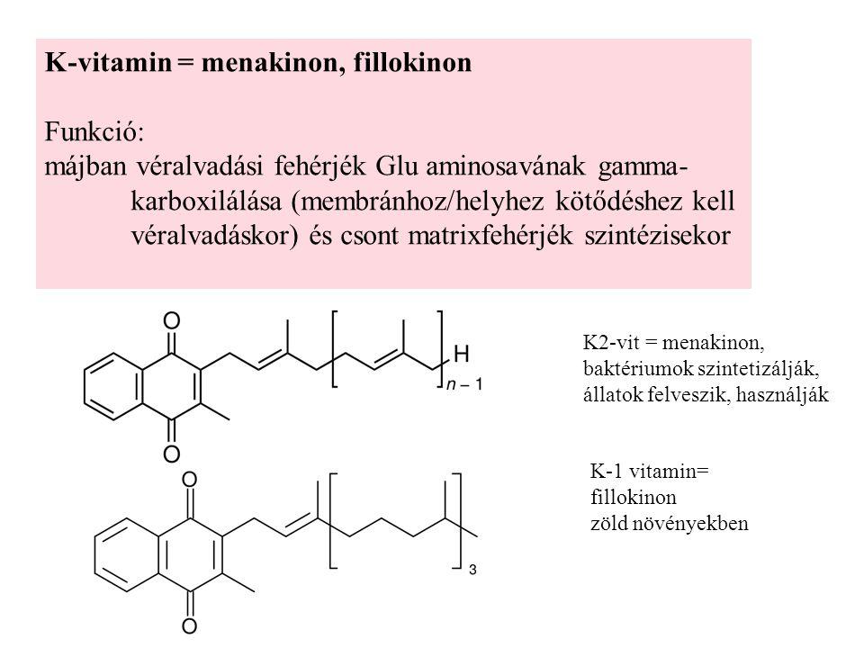 K-vitamin = menakinon, fillokinon Funkció: májban véralvadási fehérjék Glu aminosavának gamma- karboxilálása (membránhoz/helyhez kötődéshez kell véralvadáskor) és csont matrixfehérjék szintézisekor K2-vit = menakinon, baktériumok szintetizálják, állatok felveszik, használják K-1 vitamin= fillokinon zöld növényekben