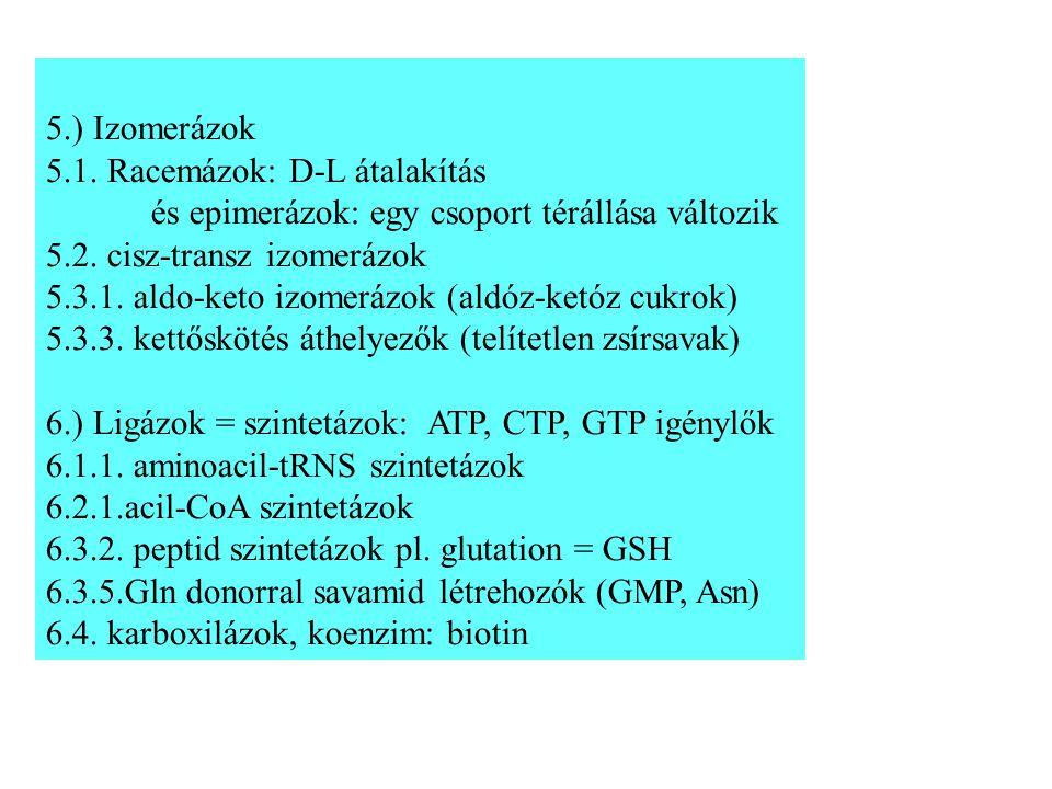 5.) Izomerázok 5.1.Racemázok: D-L átalakítás és epimerázok: egy csoport térállása változik 5.2.