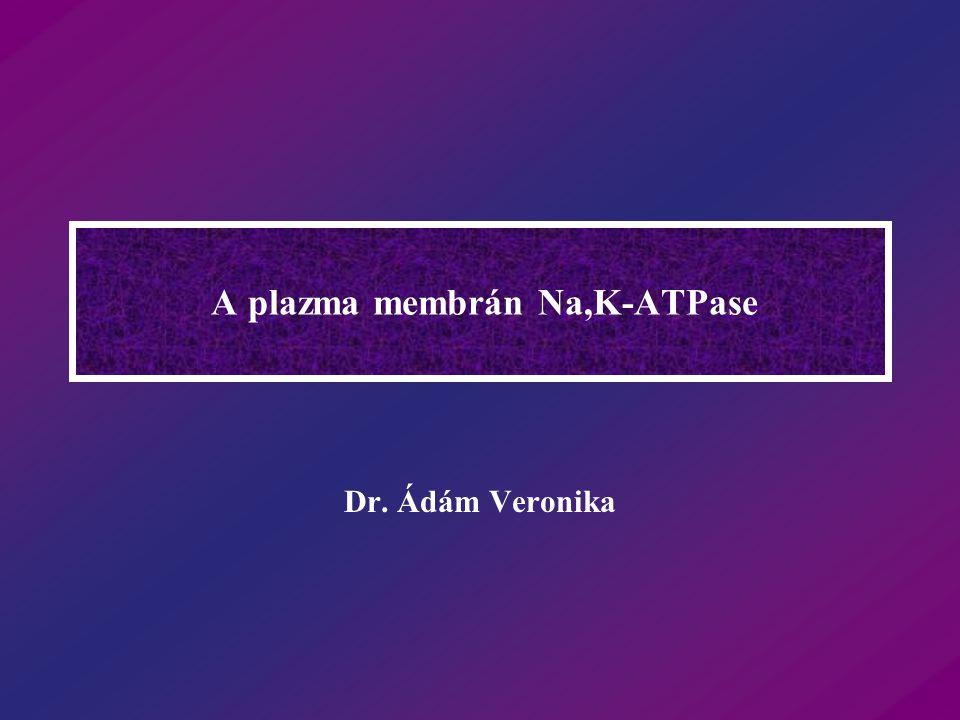 A plazma membrán Na,K-ATPase Dr. Ádám Veronika