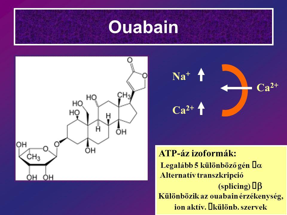 Ouabain Ca 2+ Na + ATP-áz izoformák: Legalább 5 különböző gén   Alternatív transzkripció (splicing)   Különbözik az ouabain érzékenység, ion aktív