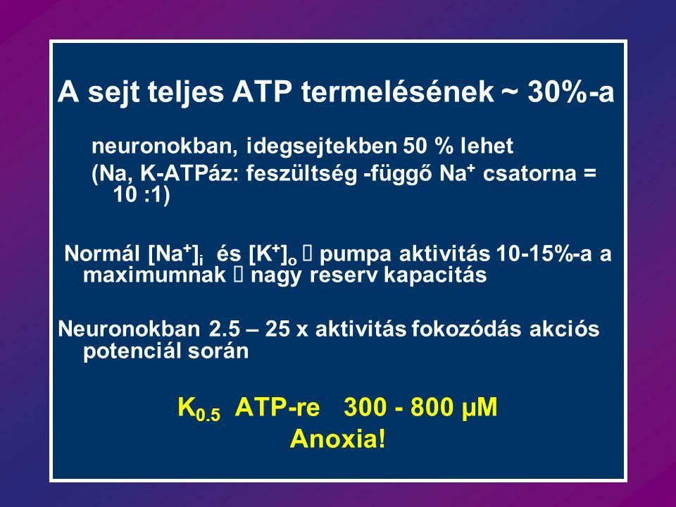 A sejt teljes ATP termelésének ~ 30%-a neuronokban, idegsejtekben 50 % lehet (Na, K-ATPáz: feszültség -függő Na + csatorna = 10 :1) Normál [Na + ] i és [K + ] o  pumpa aktivitás 10-15%-a a maximumnak  nagy reserv kapacitás Neuronokban 2.5 – 25 x aktivitás fokozódás akciós potenciál során K 0.5 ATP-re 300 - 800 µM Anoxia!