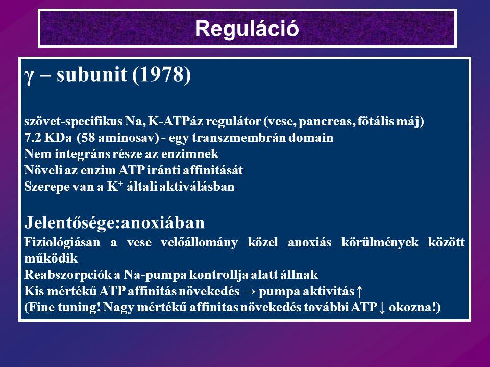 Reguláció γ – subunit (1978) szövet-specifikus Na, K-ATPáz regulátor (vese, pancreas, fötális máj) 7.2 KDa (58 aminosav) - egy transzmembrán domain Nem integráns része az enzimnek Növeli az enzim ATP iránti affinitását Szerepe van a K + általi aktiválásban Jelentősége:anoxiában Fiziológiásan a vese velőállomány közel anoxiás körülmények között működik Reabszorpciók a Na-pumpa kontrollja alatt állnak Kis mértékű ATP affinitás növekedés → pumpa aktivitás ↑ (Fine tuning.