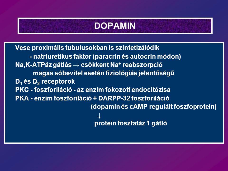 DOPAMIN Vese proximális tubulusokban is szintetizálódik - natriuretikus faktor (paracrin és autocrin módon) Na,K-ATPáz gátlás → csökkent Na + reabszor