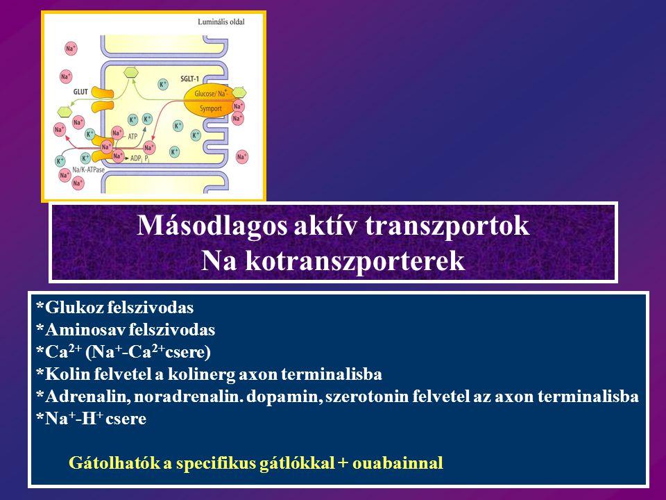 Másodlagos aktív transzportok Na kotranszporterek *Glukoz felszivodas *Aminosav felszivodas *Ca 2+ (Na + -Ca 2+ csere) *Kolin felvetel a kolinerg axon terminalisba *Adrenalin, noradrenalin.