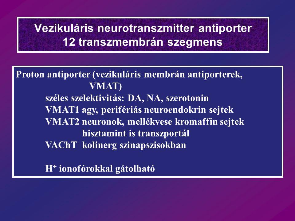 Vezikuláris neurotranszmitter antiporter 12 transzmembrán szegmens Proton antiporter (vezikuláris membrán antiporterek, VMAT) széles szelektivitás: DA