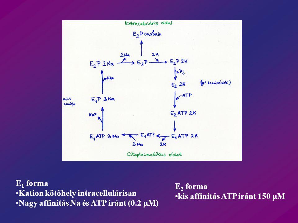 Ionofor domain: 3,4,5,(8?) transzmembrán szegment 369 - aszpartát  -alegység -55 k Da - 4 izoforma - Aktivitáshoz szükséges - S–S szükséges -Glikoziláció aktivitáshoz nem kell 100 kDa 4 izoforma