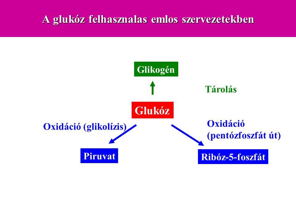 KeményítőGlikogenCellulóz Laktóz Szacharóz szájüreg  -amiláz gyomor alacsony pH, nyál, amiláz működése leáll pancreas  -amiláz  -limit dextrinek maltózmaltótriózlaktózszukrózcellulóz vékonybél oligoszacharidázokdiszacharidázok glukóz, galaktóz, fruktóz cellulóz Portális keringés