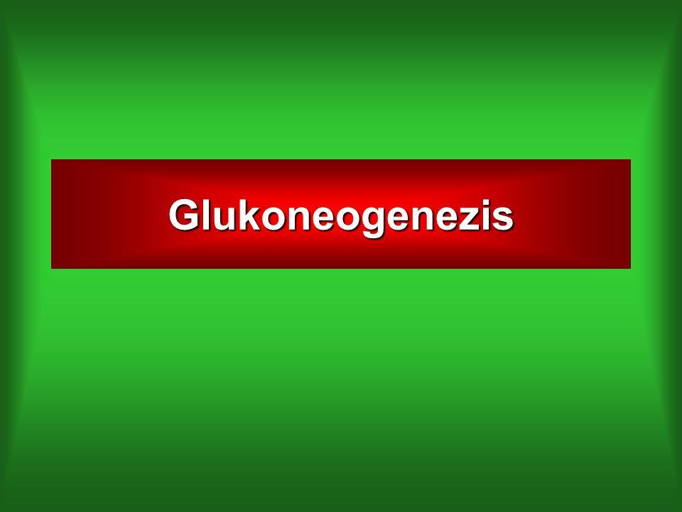 Glukoneogenezis