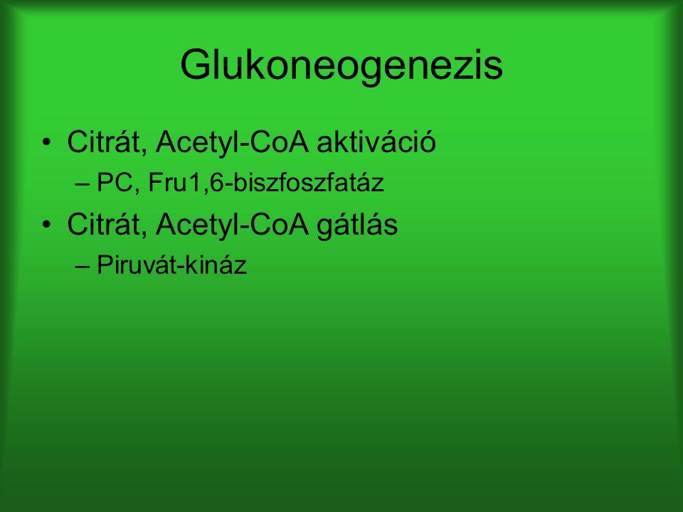 Glukoneogenezis Citrát, Acetyl-CoA aktiváció –PC, Fru1,6-biszfoszfatáz Citrát, Acetyl-CoA gátlás –Piruvát-kináz